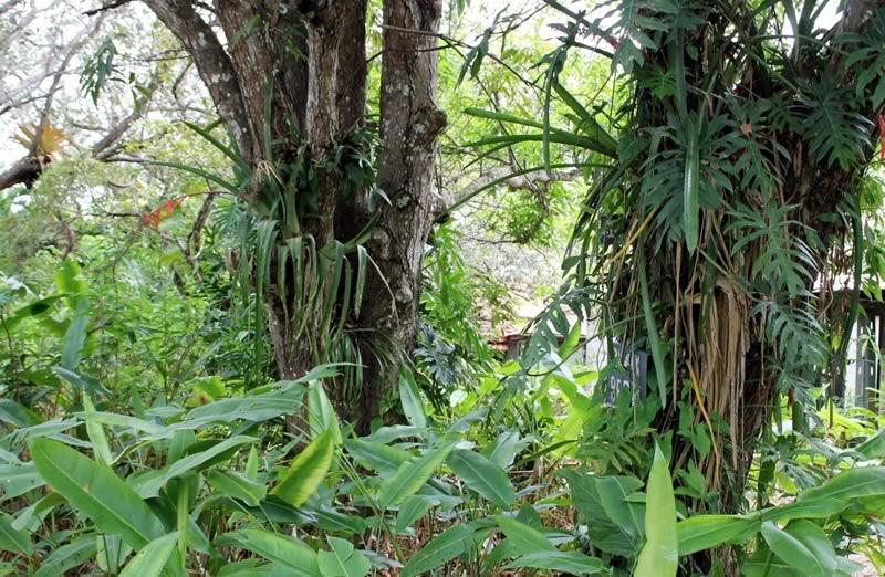 Eco Village Link