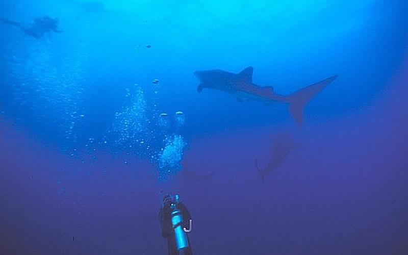 whale-shark-1