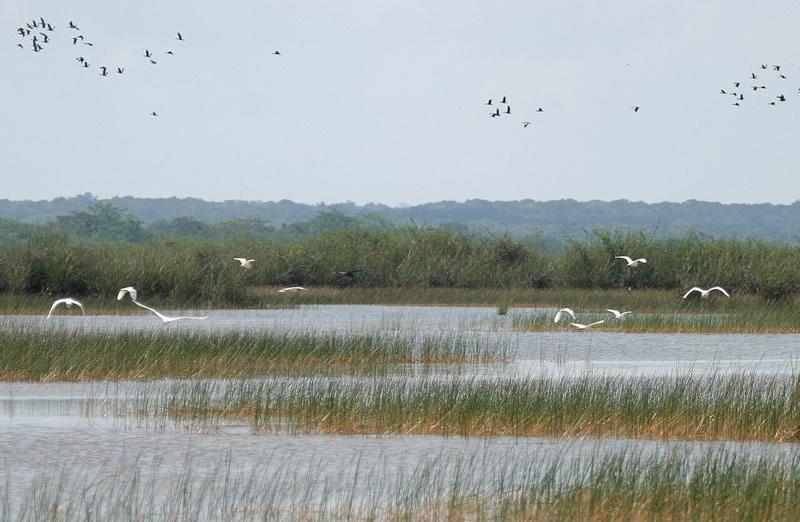 Marsh and Wetlands