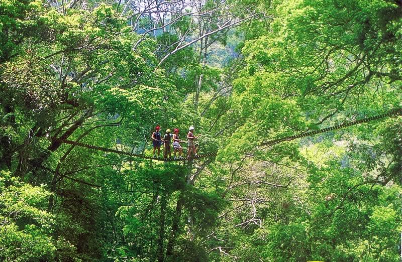 Belize Tours Canopy Walk